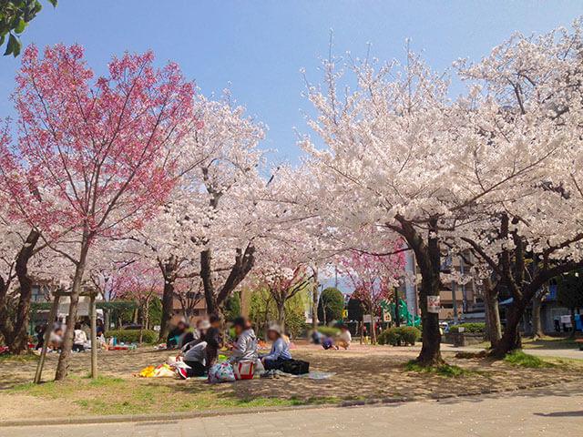 大阪府八尾市にある桜ケ丘公園の様子